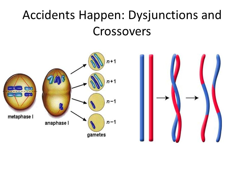 Accidents Happen: Dysjunctions and Crossovers