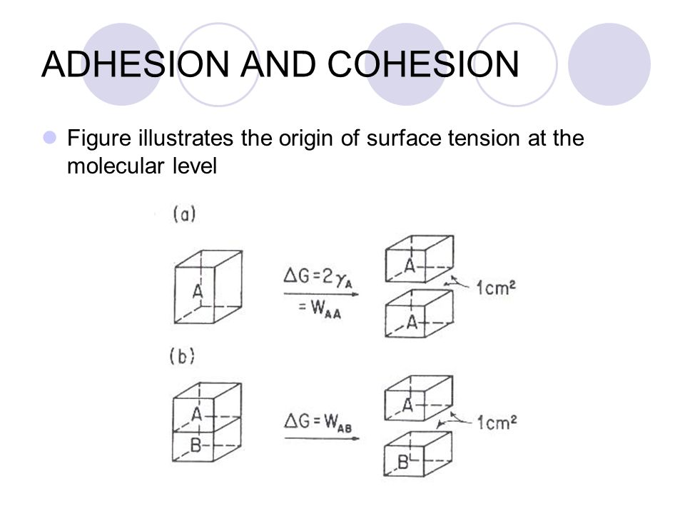 ADHESION AND COHESION Figure illustrates the origin of surface tension at the molecular level