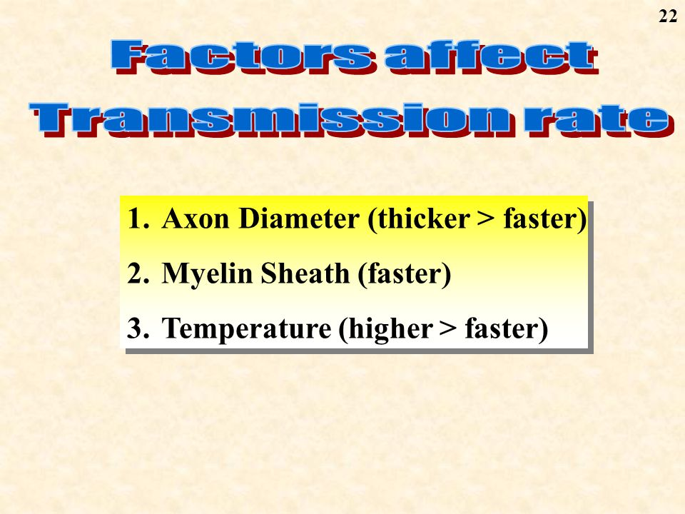 22 1.Axon Diameter (thicker > faster) 2.Myelin Sheath (faster) 3.Temperature (higher > faster) 1.Axon Diameter (thicker > faster) 2.Myelin Sheath (faster) 3.Temperature (higher > faster)
