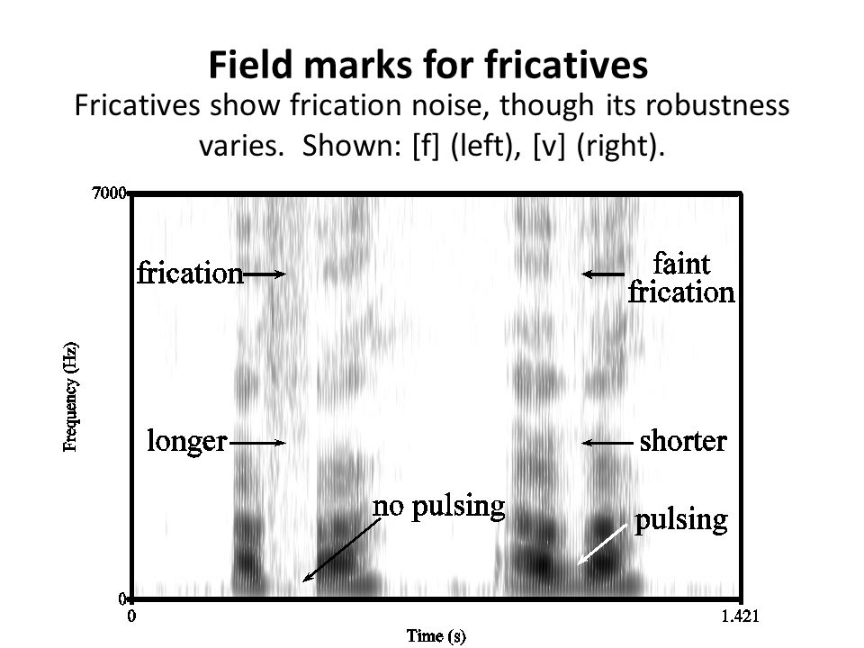 Field marks for nasals Nasals show formants in their stop occlusions. They may or may not show a burst. Shown: [m].