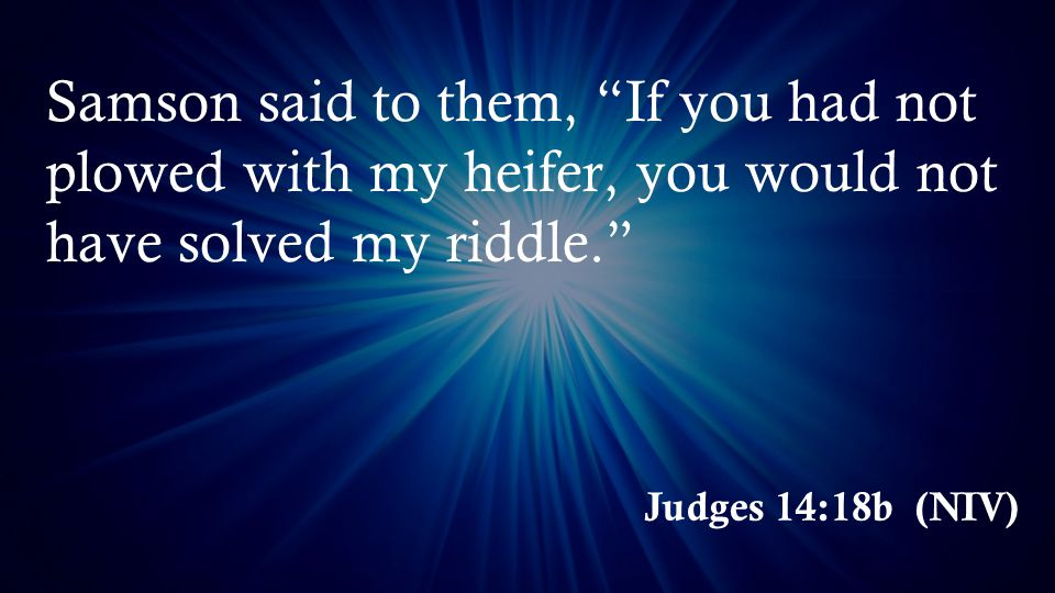 Judges 14:18b (NIV) Samson said to them, If you had not plowed with my heifer, you would not have solved my riddle.