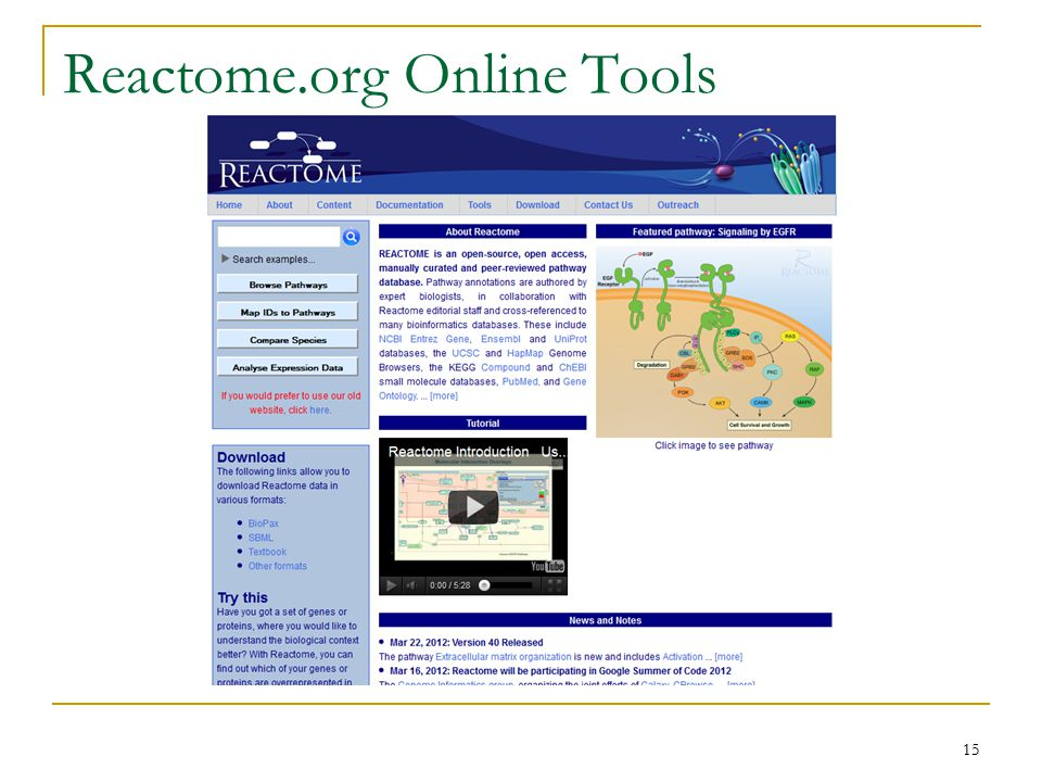 Reactome.org Online Tools 15