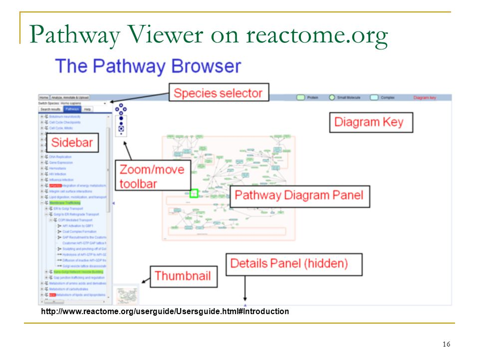 Pathway Viewer on reactome.org 16 http://www.reactome.org/userguide/Usersguide.html#Introduction