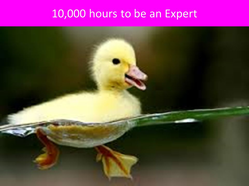 10,000 hours to be an Expert