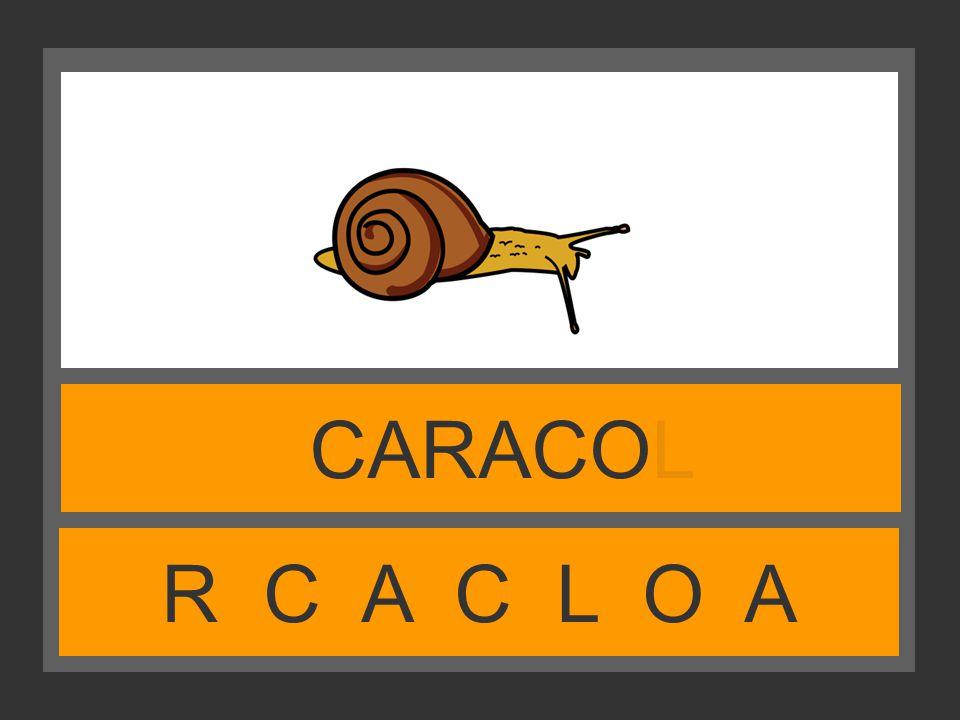 R C A C L O A CARACOL