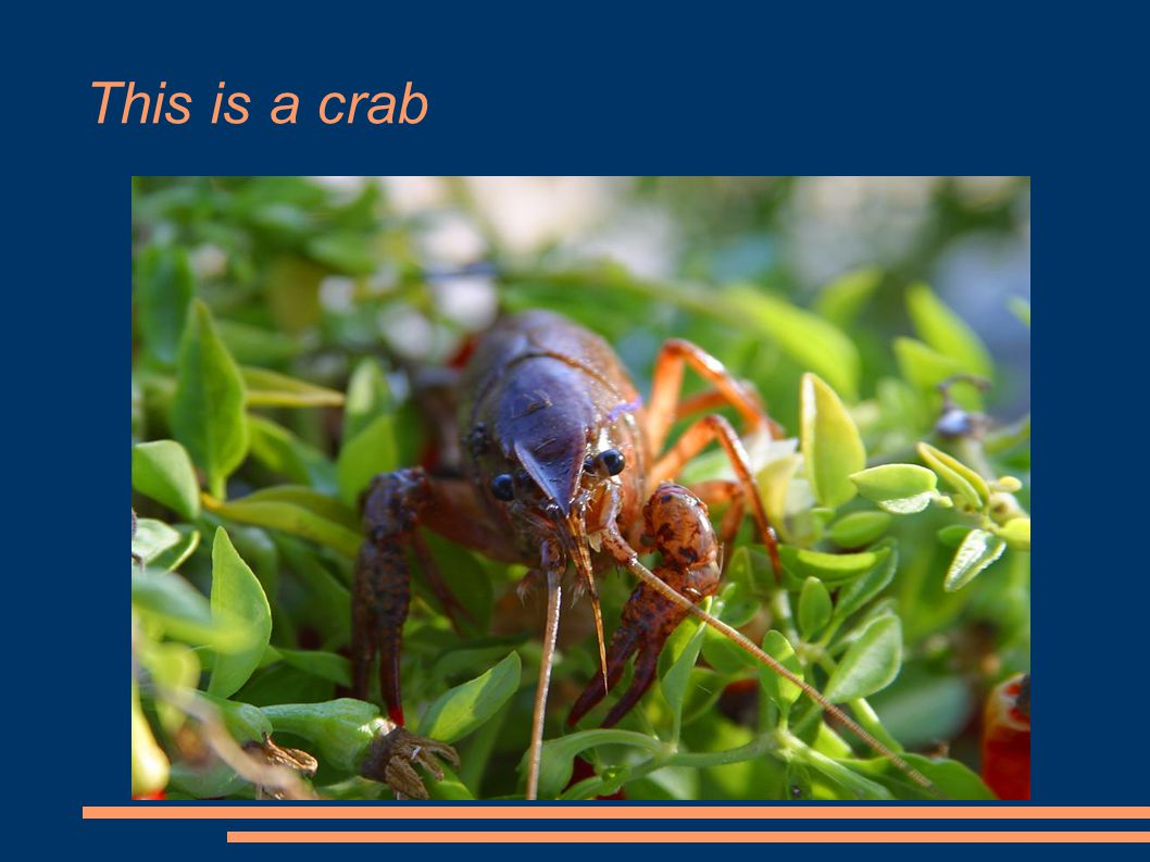 This is a crab