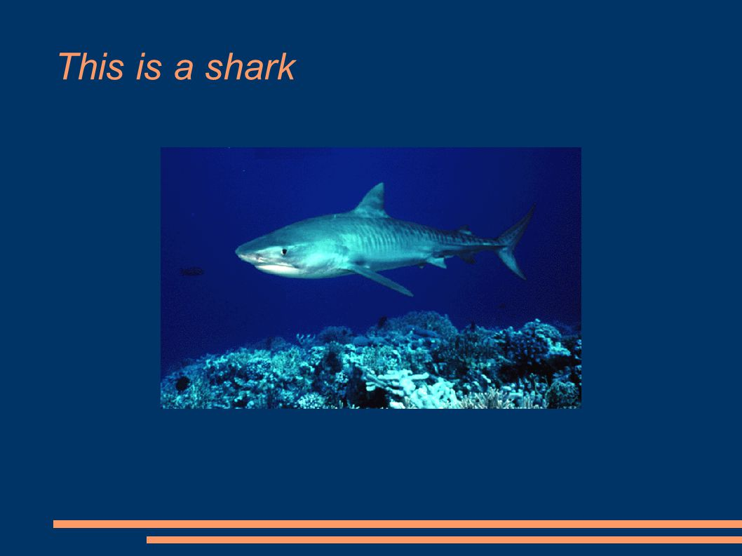 This is a shark