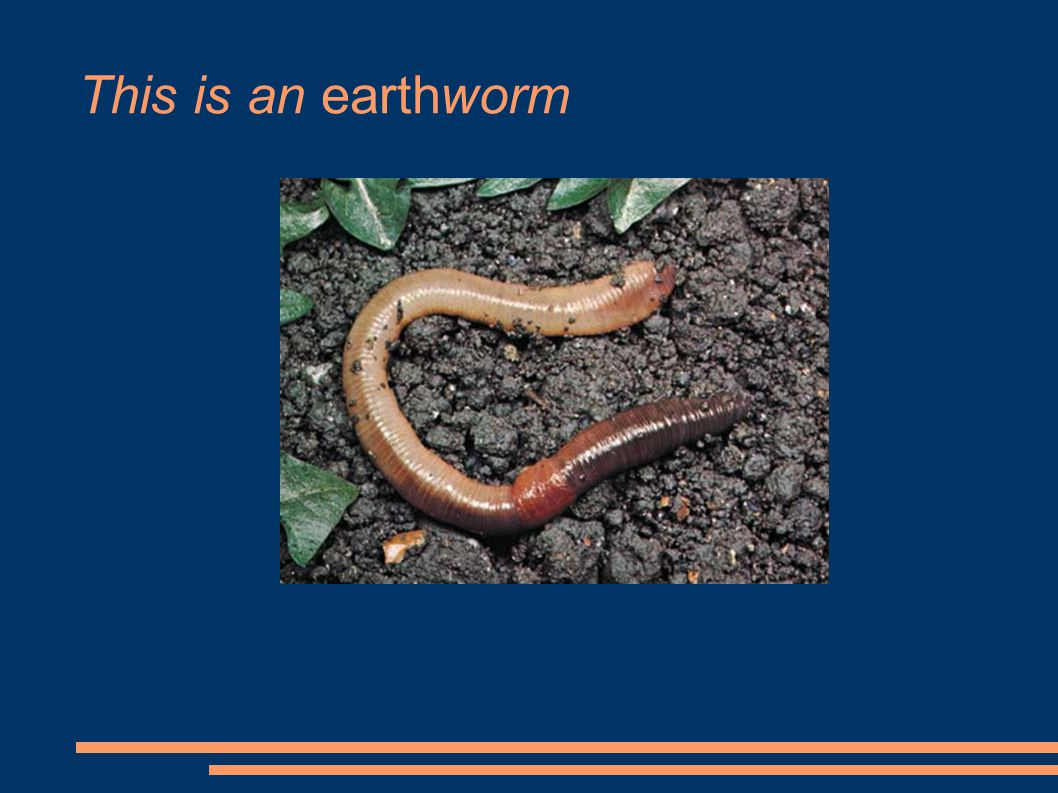 This is an earthworm
