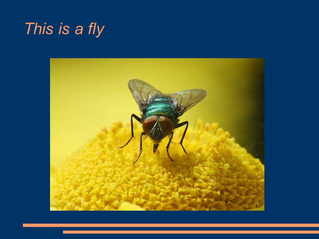 This is a mosquito