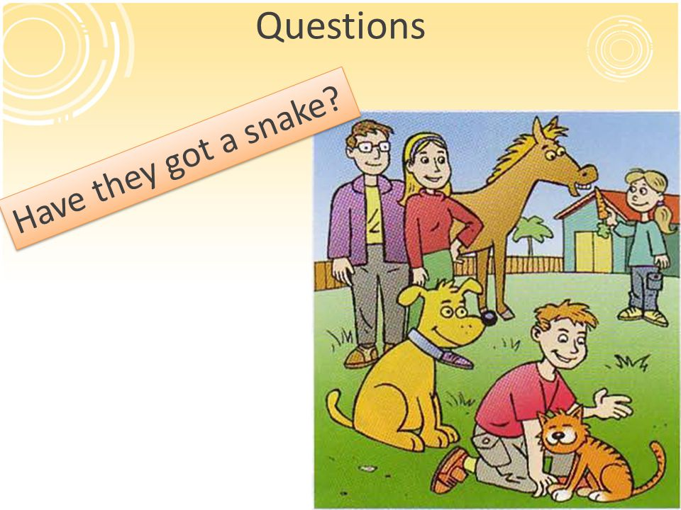 Questions Have they got a snake?