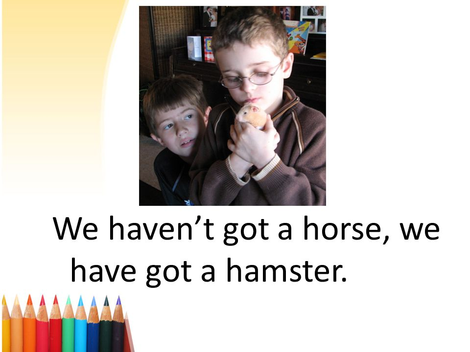 We haven't got a horse, we have got a hamster.