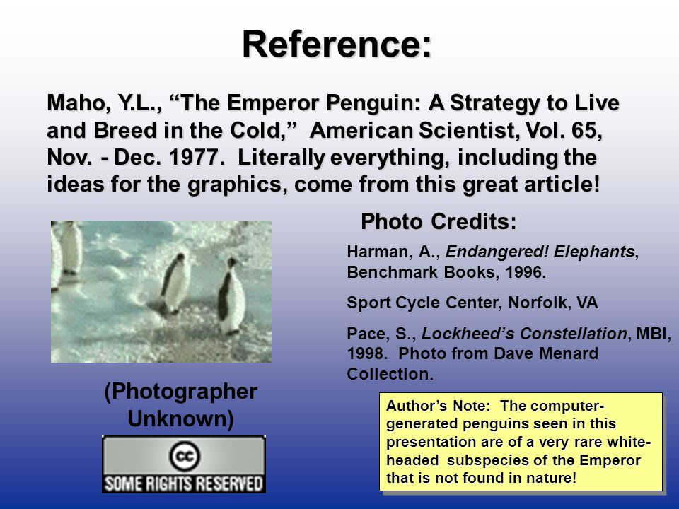 Emperor Penguins - R.J.