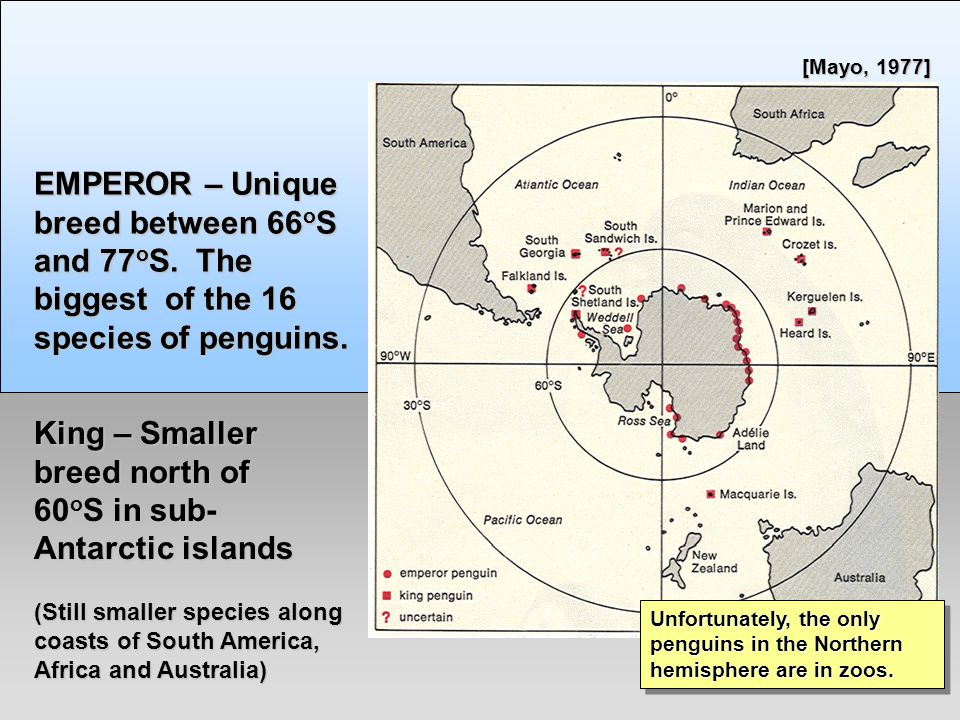 Emperor Penguins - R.J.Ribando EMPEROR – Unique breed between 66 o S and 77 o S.
