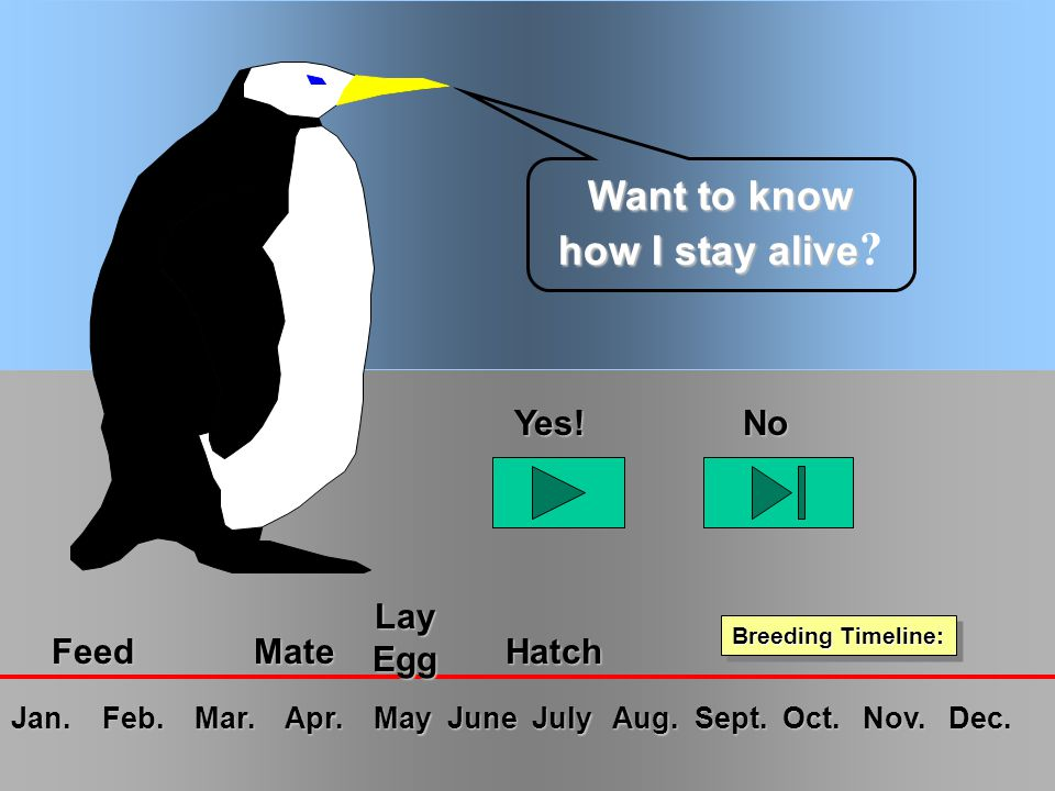 Emperor Penguins - R.J.Ribando Want to know how I stay alive Want to know how I stay alive .
