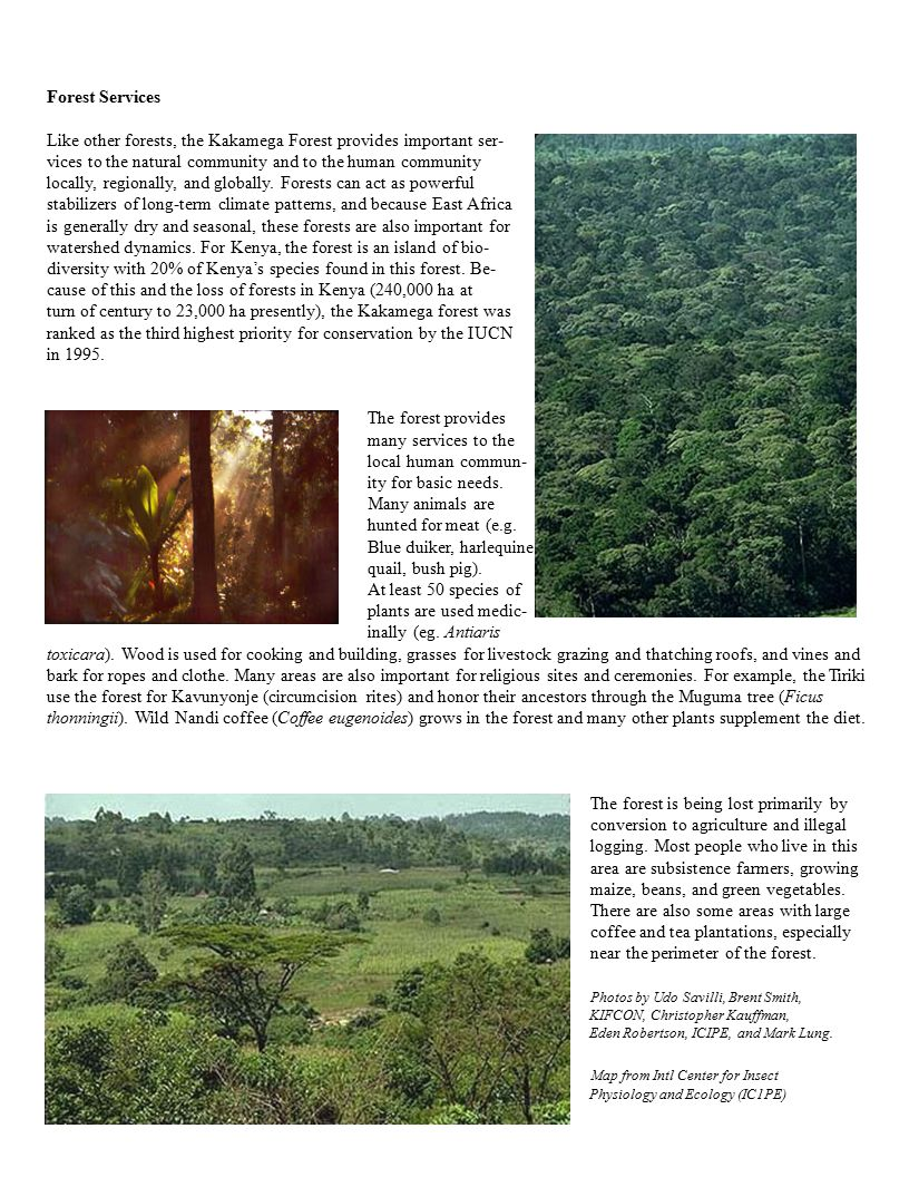 Forest Services Like other forests, the Kakamega Forest provides important ser- vices to the natural community and to the human community locally, regionally, and globally.