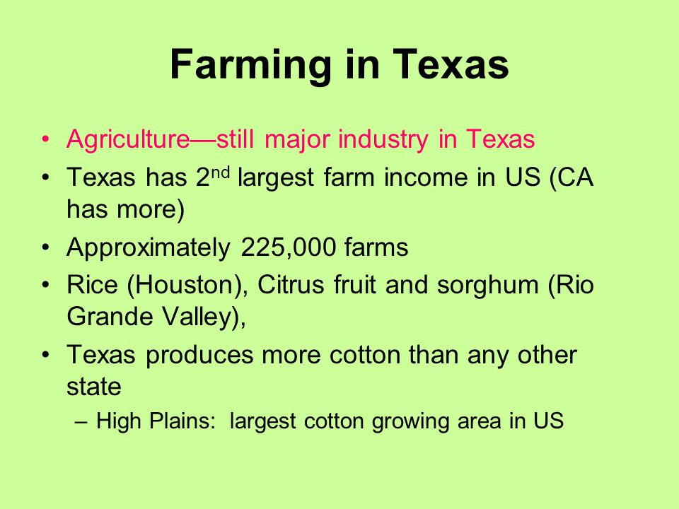 Farming in Texas Agriculture—still major industry in Texas Texas has 2 nd largest farm income in US (CA has more) Approximately 225,000 farms Rice (Houston), Citrus fruit and sorghum (Rio Grande Valley), Texas produces more cotton than any other state –High Plains: largest cotton growing area in US
