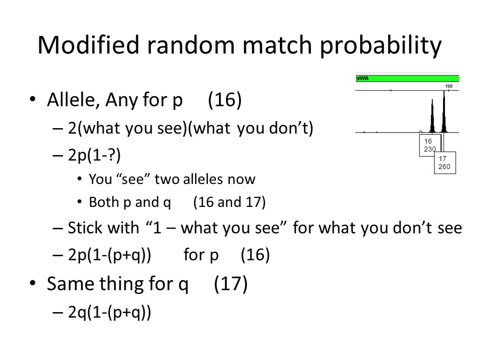 """Modified random match probability Allele, Any for p (16) – 2(what you see)(what you don't) – 2p(1-?) You """"see"""" two alleles now Both p and q (16 and 17"""