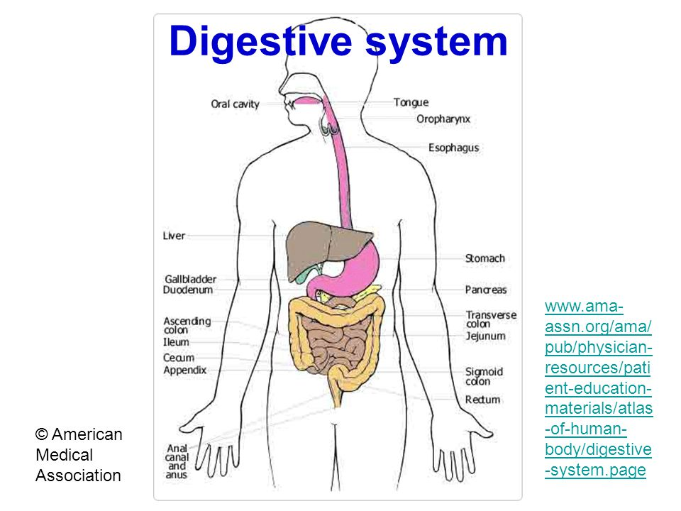 Digestive system © American Medical Association www.ama- assn.org/ama/ pub/physician- resources/pati ent-education- materials/atlas -of-human- body/di