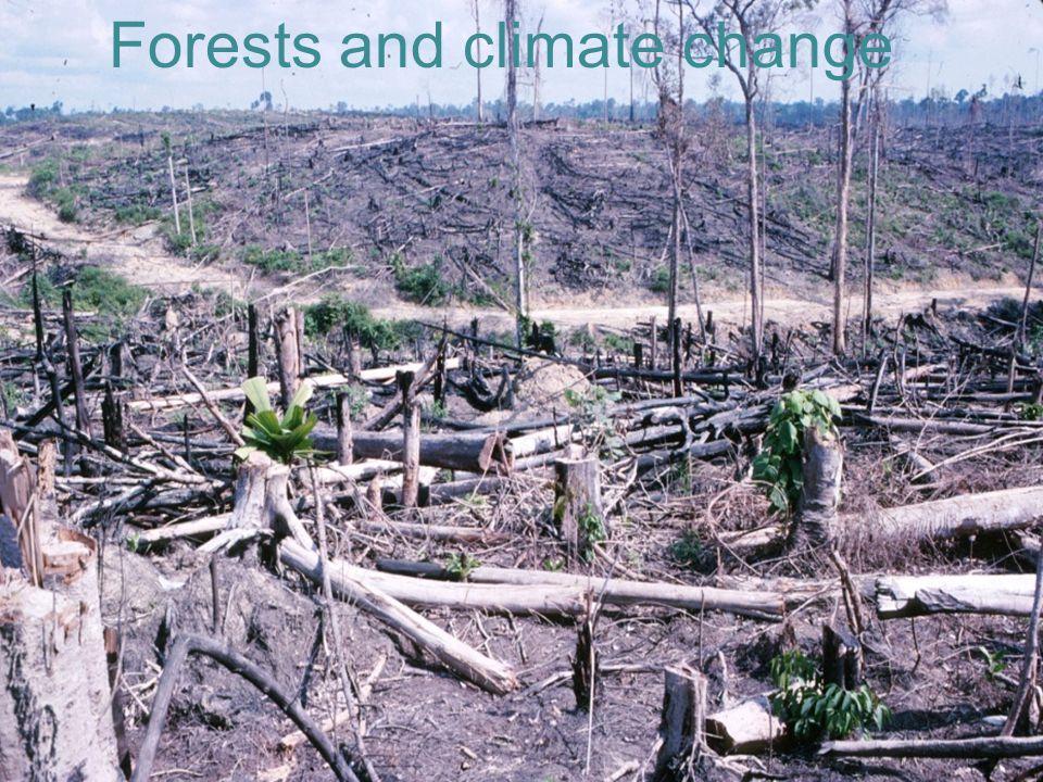 UNIVERSITETET FOR MILJØ- OG BIOVITENSKAP www.umb.no Forests and global warming Forests and climate change