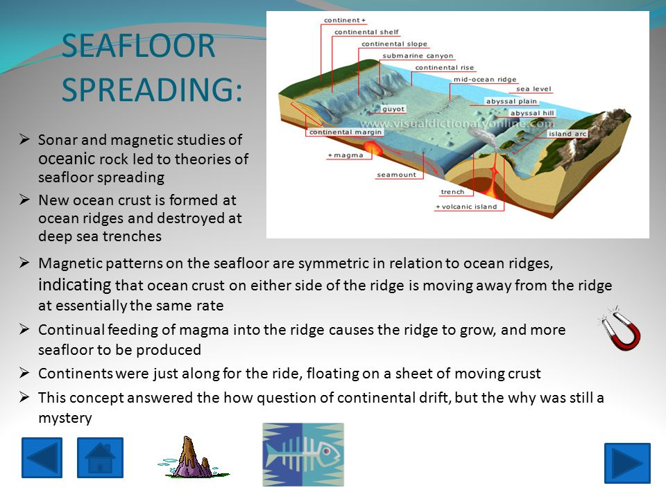 SEAFLOOR SPREADING:  Magnetic patterns on the seafloor are symmetric in relation to ocean ridges, indicating that ocean crust on either side of the ridge is moving away from the ridge at essentially the same rate  Continual feeding of magma into the ridge causes the ridge to grow, and more seafloor to be produced  Continents were just along for the ride, floating on a sheet of moving crust  This concept answered the how question of continental drift, but the why was still a mystery  Sonar and magnetic studies of oceanic rock led to theories of seafloor spreading  New ocean crust is formed at ocean ridges and destroyed at deep sea trenches