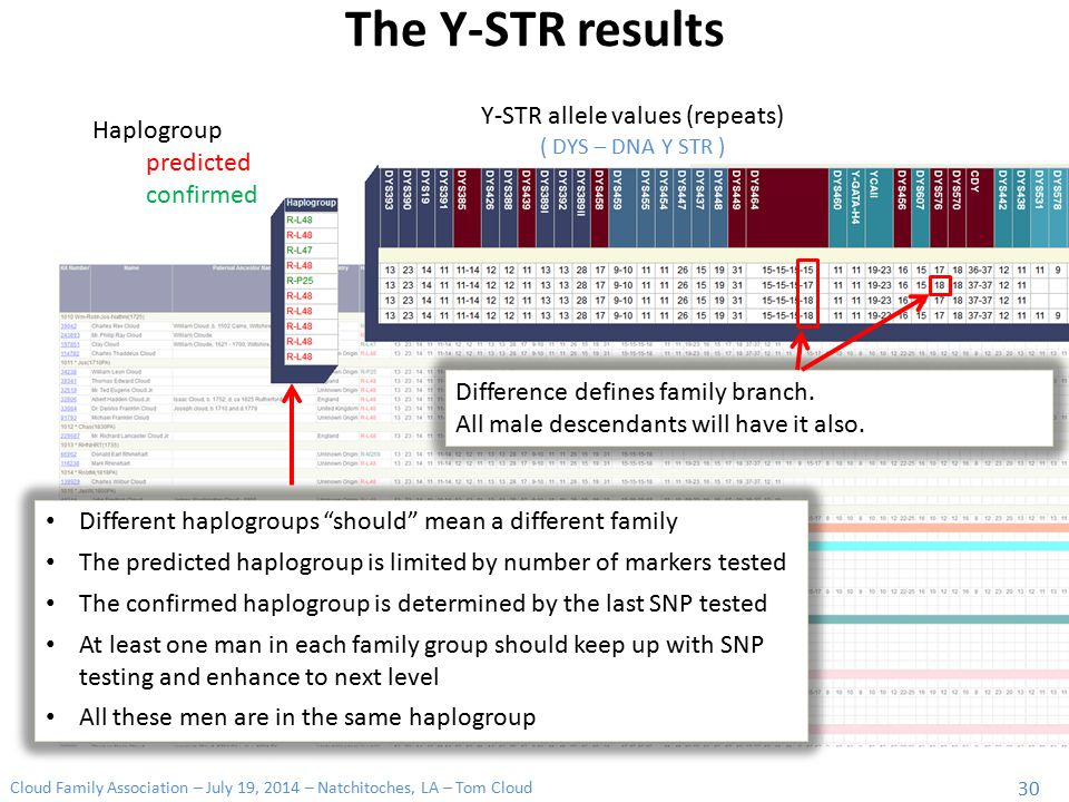 Cloud Family Association – July 19, 2014 – Natchitoches, LA – Tom Cloud 30 The Y-STR results Y-STR allele values (repeats) ( DYS – DNA Y STR ) Haplogr