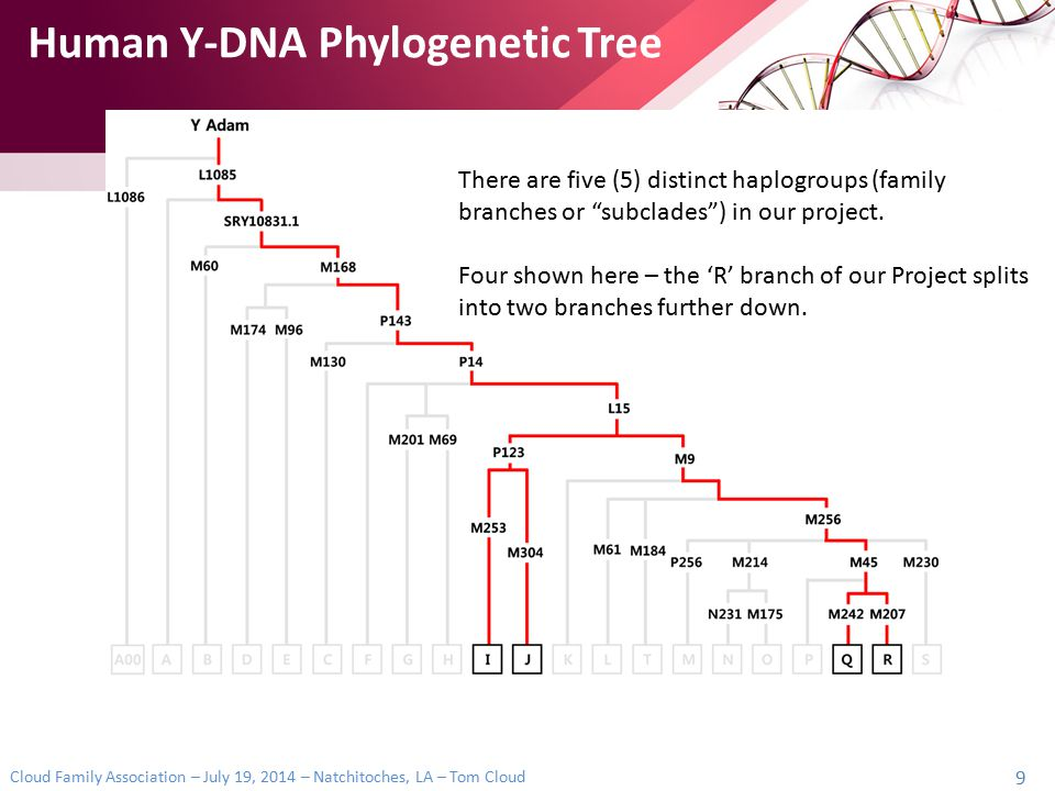 Cloud Family Association – July 19, 2014 – Natchitoches, LA – Tom Cloud 20 Haplogroup names have changed The number of SNPs is rapidly increasing The position of the SNP in the tree can change This resulted in a new naming convention NAME CONFUSION