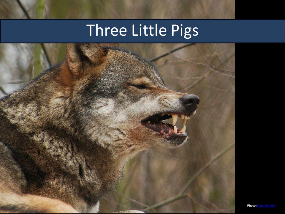 Three Little Pigs Photo: Kristi HerbertKristi Herbert