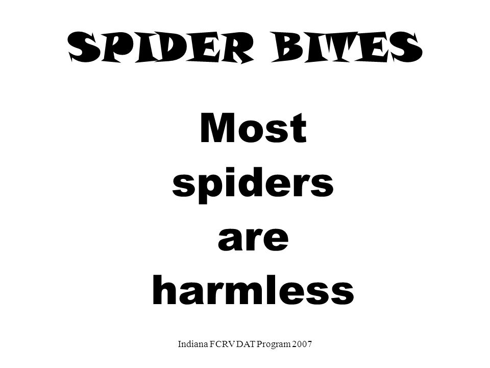 SPIDER BITES Most spiders are harmless Indiana FCRV DAT Program 2007