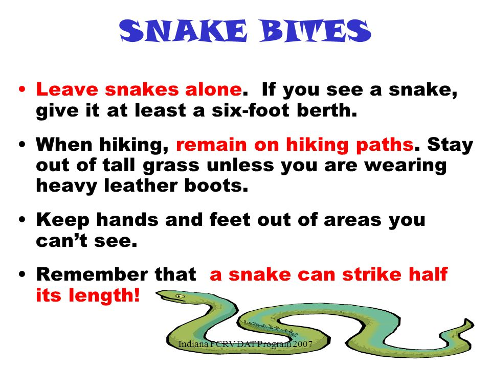 SNAKE BITES Leave snakes alone.If you see a snake, give it at least a six-foot berth.