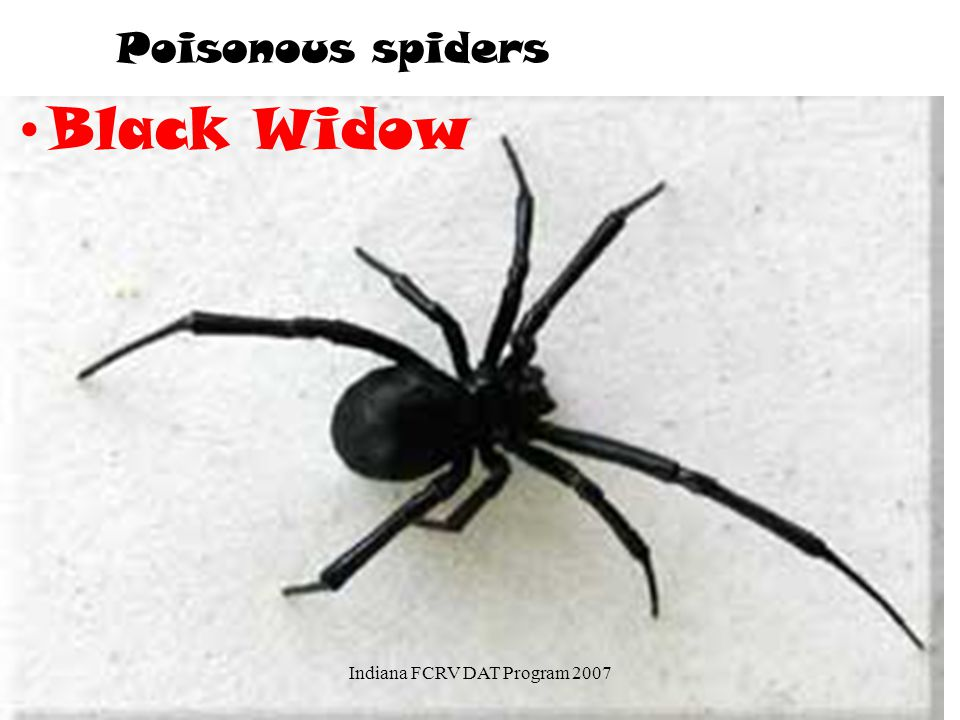 Poisonous spiders Black Widow Indiana FCRV DAT Program 2007