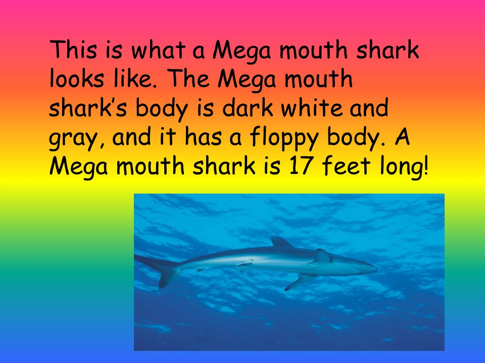 This is what a Mega mouth shark looks like.