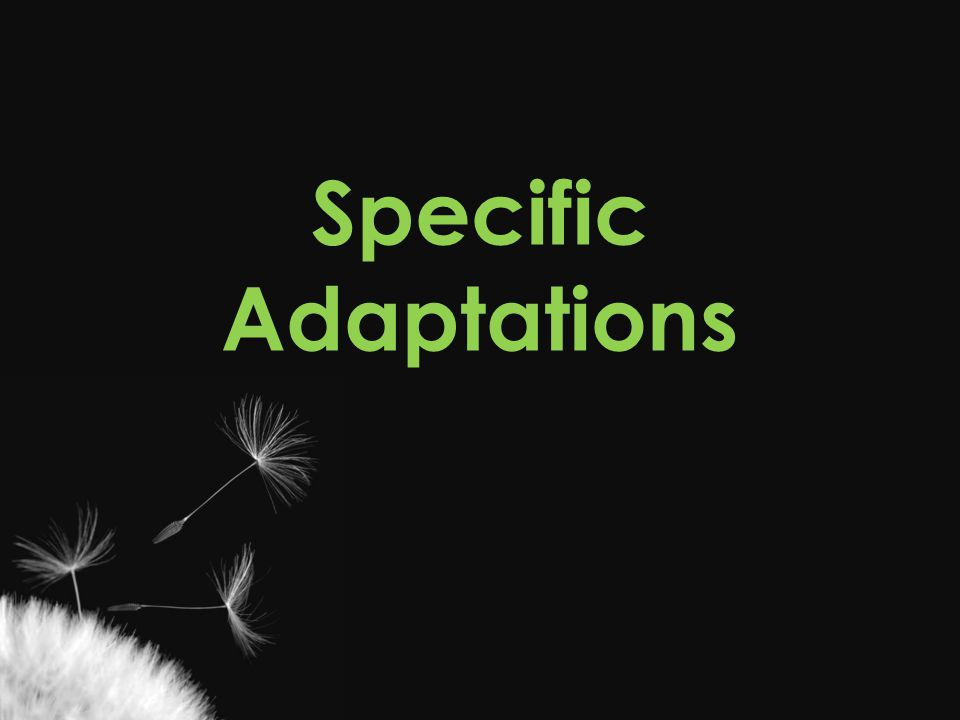 Specific Adaptations