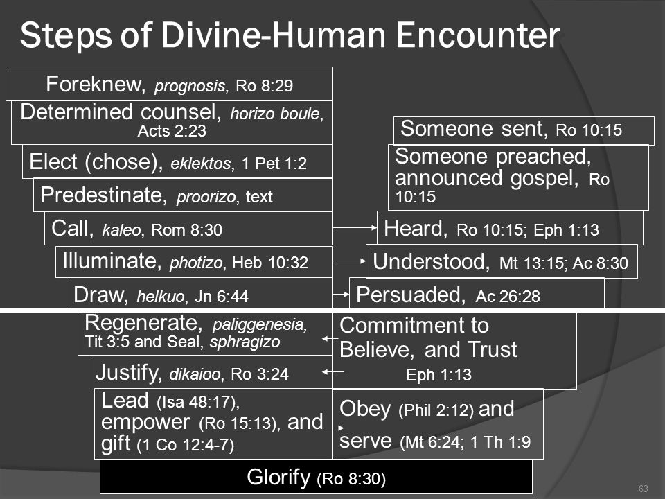 Steps of Divine-Human Encounter 63Theology Proper Foreknew, prognosis, Ro 8:29 Determined counsel, horizo boule, Acts 2:23 Elect (chose), eklektos, 1