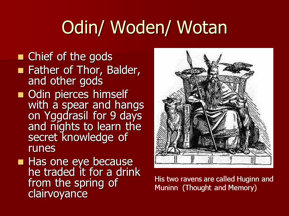 Odin/ Woden/ Wotan Chief of the gods Chief of the gods Father of Thor, Balder, and other gods Father of Thor, Balder, and other gods Odin pierces himself with a spear and hangs on Yggdrasil for 9 days and nights to learn the secret knowledge of runes Odin pierces himself with a spear and hangs on Yggdrasil for 9 days and nights to learn the secret knowledge of runes Has one eye because he traded it for a drink from the spring of clairvoyance Has one eye because he traded it for a drink from the spring of clairvoyance His two ravens are called Huginn and Muninn (Thought and Memory)