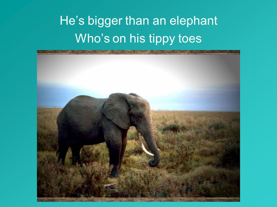 He's bigger than an elephant Who's on his tippy toes