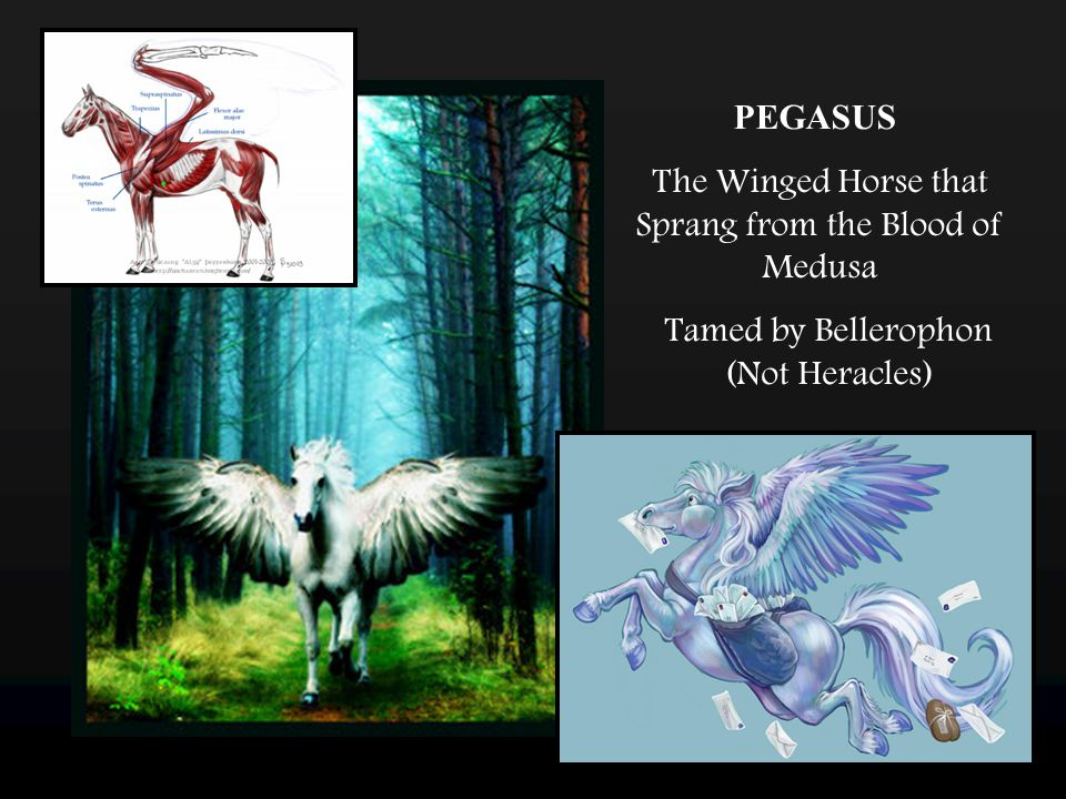 PEGASUS The Winged Horse that Sprang from the Blood of Medusa Tamed by Bellerophon (Not Heracles)