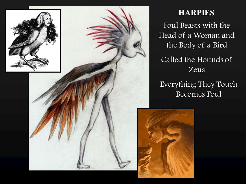 HARPIES Foul Beasts with the Head of a Woman and the Body of a Bird Called the Hounds of Zeus Everything They Touch Becomes Foul