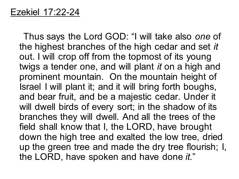 """Ezekiel 17:22-24 Thus says the Lord GOD: """"I will take also one of the highest branches of the high cedar and set it out. I will crop off from the topm"""