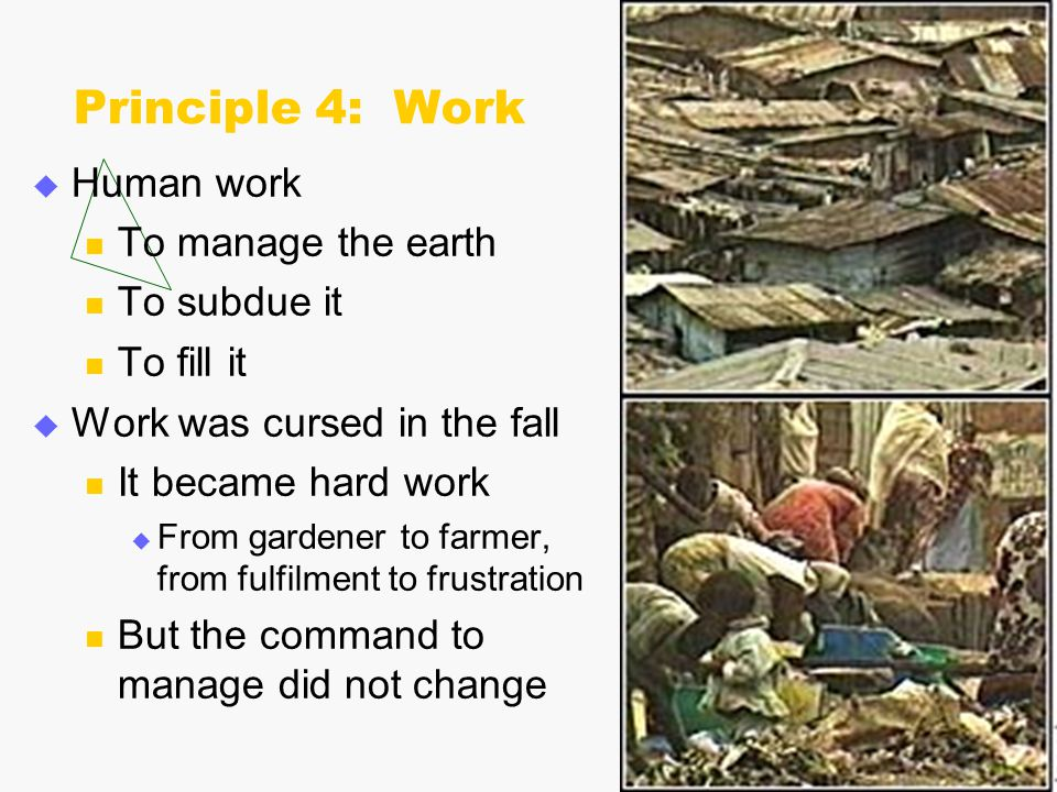 Principle 4: Work  Human work To manage the earth To subdue it To fill it  Work was cursed in the fall It became hard work  From gardener to farmer