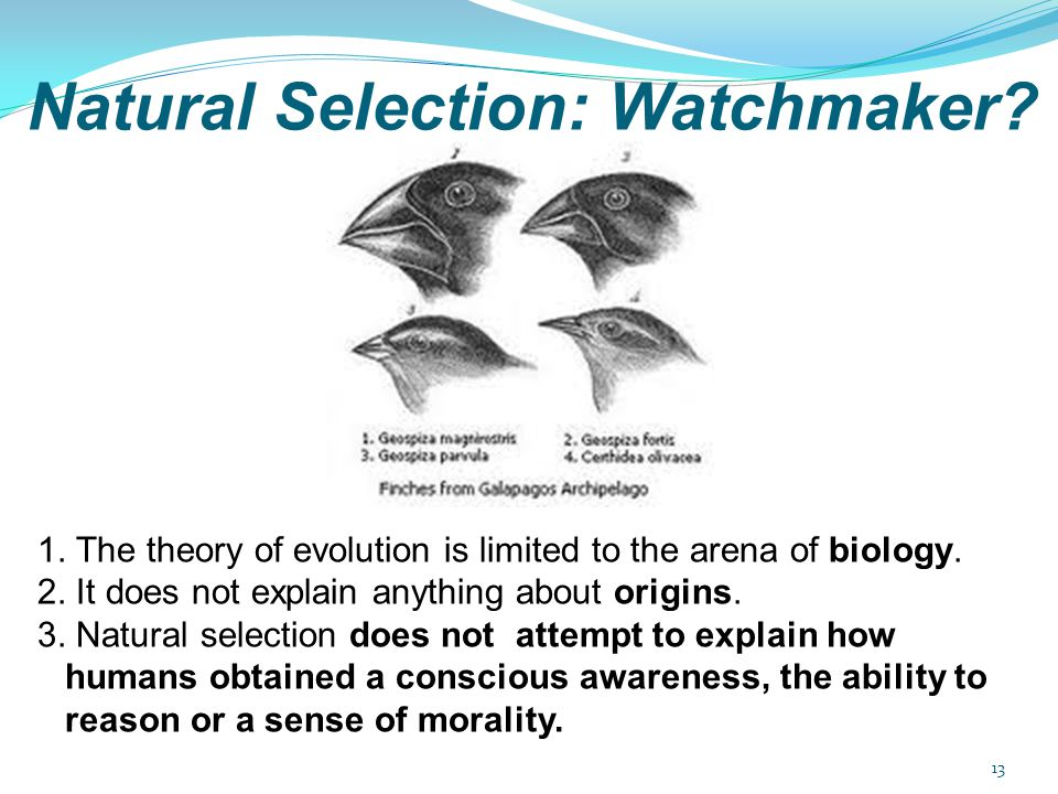 Natural Selection: Watchmaker? 1. The theory of evolution is limited to the arena of biology. 2. It does not explain anything about origins. 3. Natura