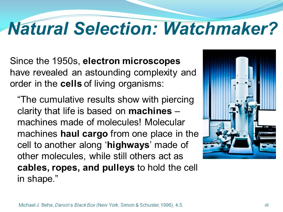 Natural Selection: Watchmaker? Since the 1950s, electron microscopes have revealed an astounding complexity and order in the cells of living organisms