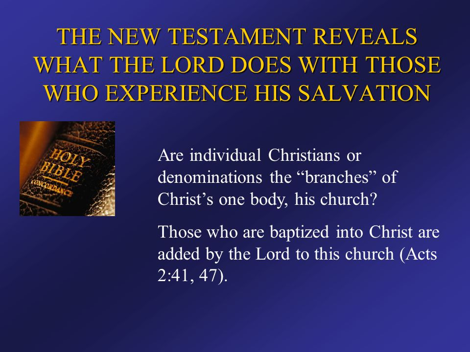 """Are individual Christians or denominations the """"branches"""" of Christ's one body, his church? Those who are baptized into Christ are added by the Lord t"""