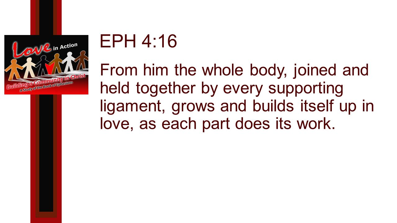 EPH 4:16 From him the whole body, joined and held together by every supporting ligament, grows and builds itself up in love, as each part does its work.