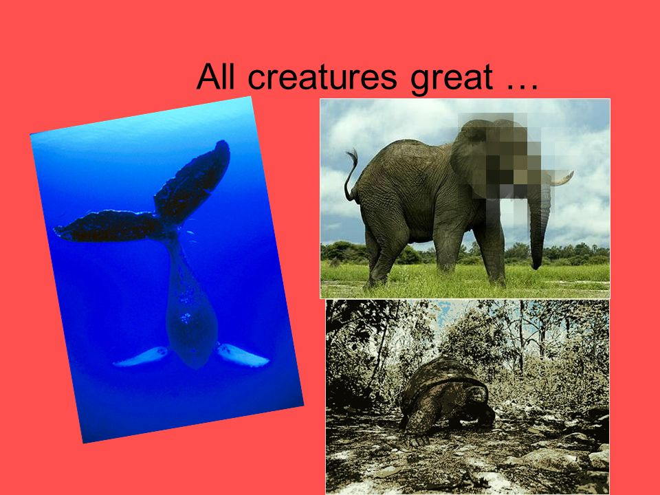 All creatures great …