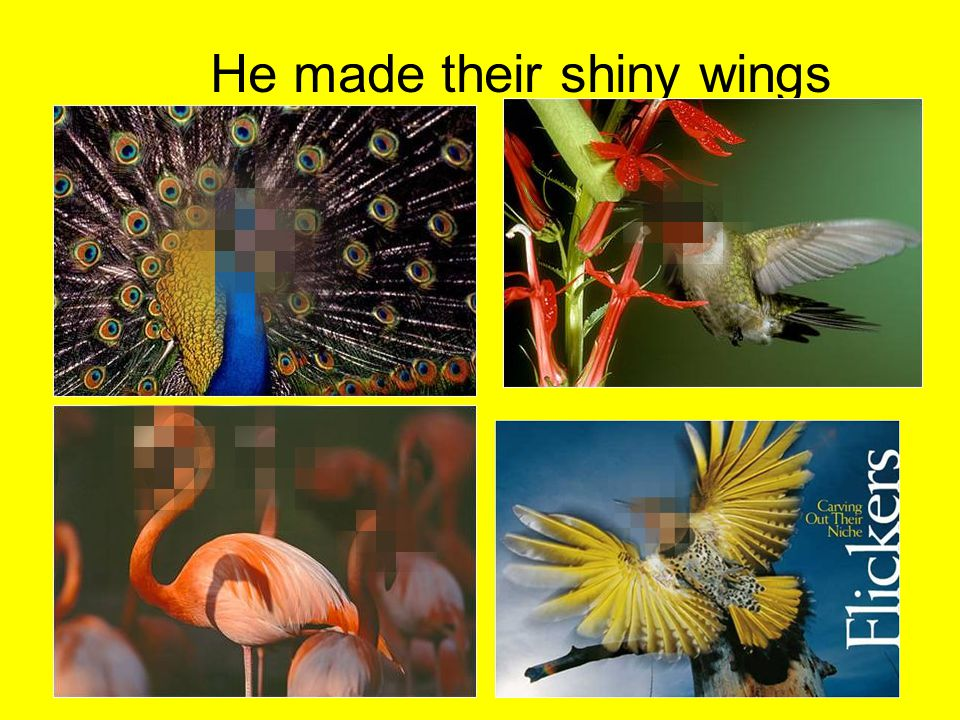 He made their shiny wings