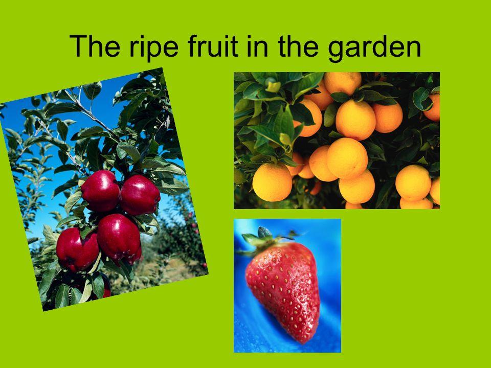 The ripe fruit in the garden