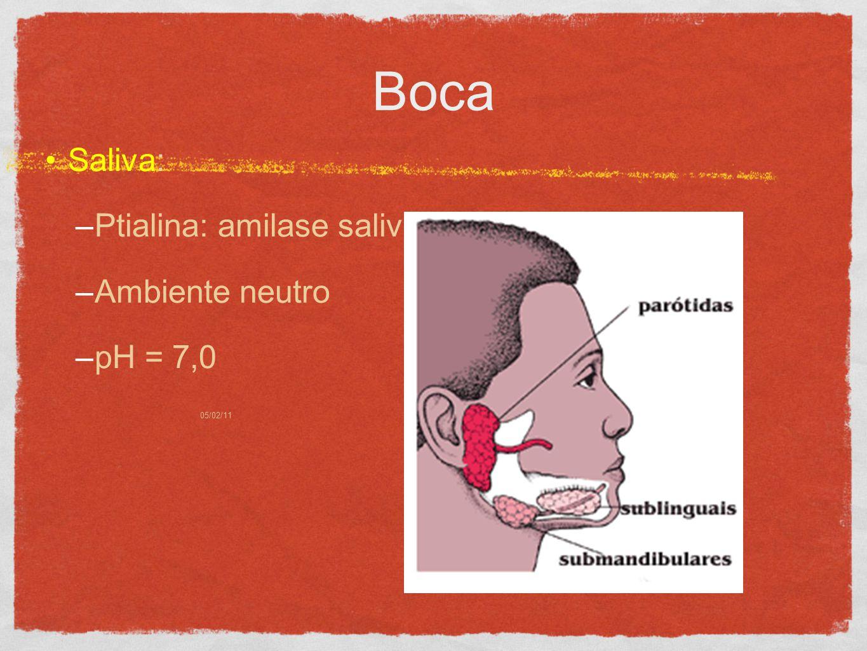 05/02/113 Boca Saliva: –Ptialina: amilase salivar –Ambiente neutro –pH = 7,0