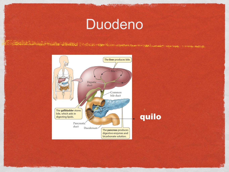 05/02/1110 Digestão no duodeno Suco entérico:dissacaridases peptidase Suco pancreático:HCO 3 amilase e lipase tripsina e quimiotripsina (proteases) nucleases (DNAse e RNAse) Bílis (bile): emulsionadora de gorduras (sais de colesterol) produzida no fígado pH = 8