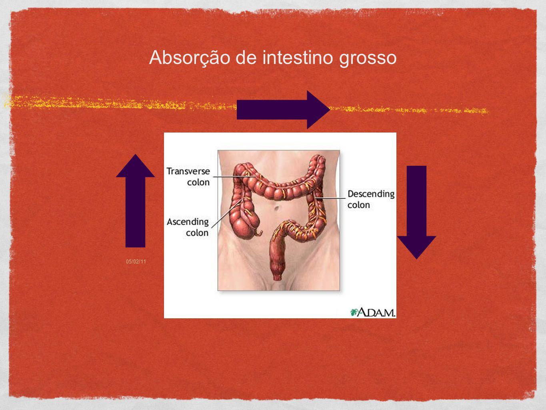 05/02/1112 Absorção de intestino grosso