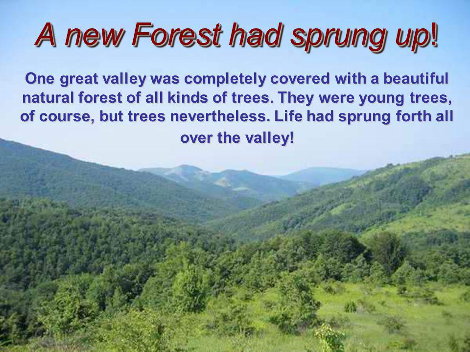 When in his forties, the hiker once again visited this same area, he was astounded at what he saw. Twenty Years Later!